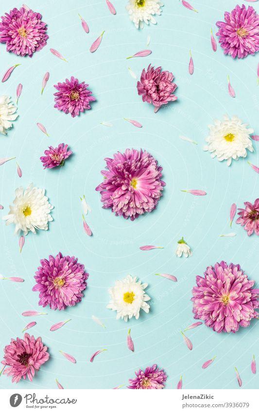 Muster aus bunten Blumen auf pastellblauem Hintergrund Zusammensetzung Design Postkarte geblümt Sommer Hochzeit Natur schön altehrwürdig weiß Pflanze Einladung