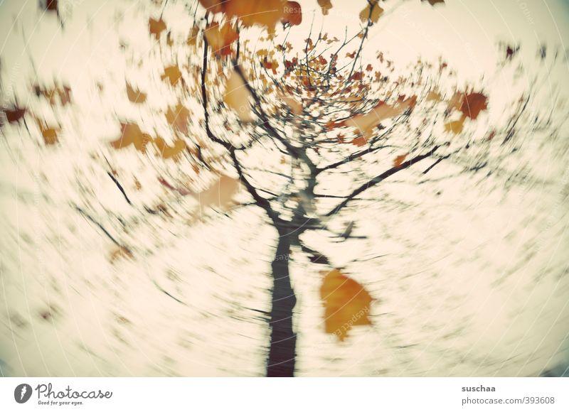 mein herbst III Umwelt Natur Luft Himmel Herbst Klima Baum Blatt retro gold rotieren Politische Bewegungen Dynamik wirbeln Gedeckte Farben Außenaufnahme