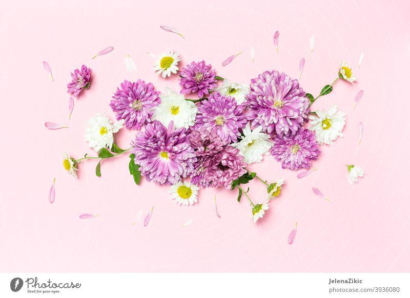 Kreatives Layout mit weißen und violetten Blumen auf pastellrosa Hintergrund gemacht Zusammensetzung Design Postkarte geblümt Sommer Hochzeit Natur schön