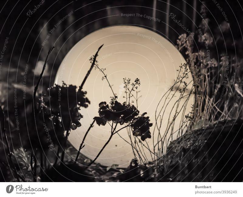 Blick vor die Glaskugel Lampe Kugel Pflanzen Dunkelheit Licht rund glänzend hell dunkel Dekoration & Verzierung Garten Gartenbe Schatten leuchten Kunstlicht