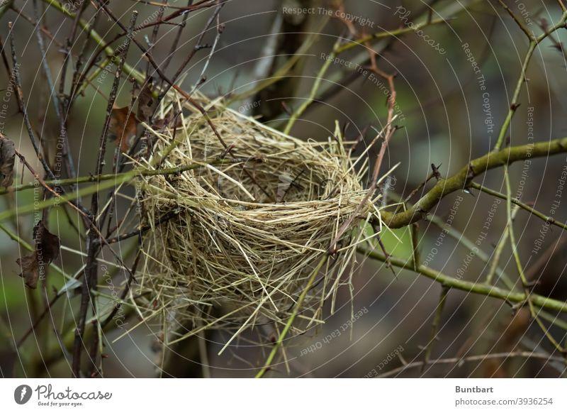 Vogelnest Nest Natur Außenaufnahme Halme Gras Menschenleer Hecke Äste Winter Zweige u. Äste Pflanze Baum Umwelt Herbst Äste und Zweige Ast Geäst herbstlich
