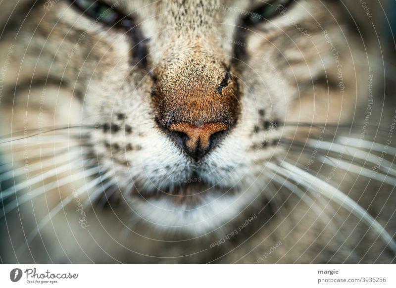 Nahaufnahme einer Katzennase mit einem Kratzer Schnurrhaar Hauskatze Tier Tiergesicht Haustier Tierporträt Verletzung Säugetier Katzenauge Schnauze kuschlig
