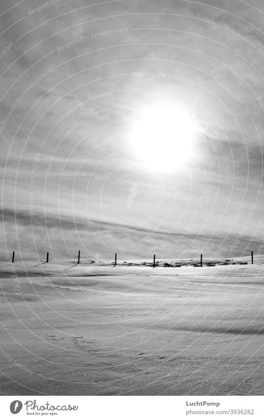 Schneelandschaft in Monochrom Zaun Zaunpfahl Wiese Sonne bedeckter himmel kalt Winter Außenaufnahme Menschenleer Himmel Sonnenlicht Schatten Frost Landschaft