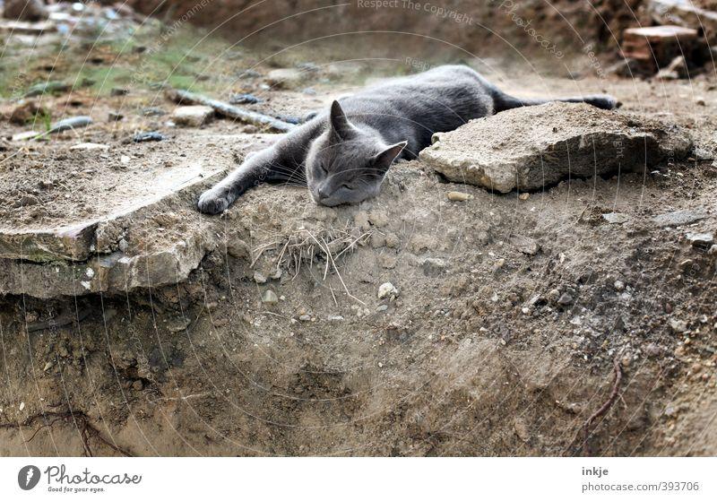 Baulöwe Katze Erholung ruhig Tier Gefühle grau braun liegen Erde schlafen Boden Baustelle Gelassenheit Müdigkeit Haustier Hauskatze