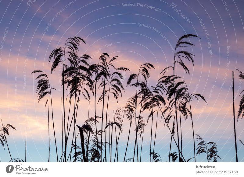 Seegras im Morgenlicht Gras Farbfoto Natur Strand Himmel blau Ferien & Urlaub & Reisen Landschaft Außenaufnahme Morgendämmerung Sonnenaufgang Morgenstimmung