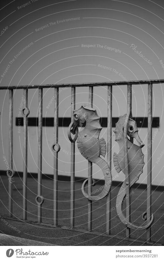 Seepferdchen am Geländer Schwarz-weiß Außenaufnahme Menschenleer Eisengeländer Seepferdchen aus Eisen in die Gitterstreben eingearbeitet Ca. 50iger Jahre Stil