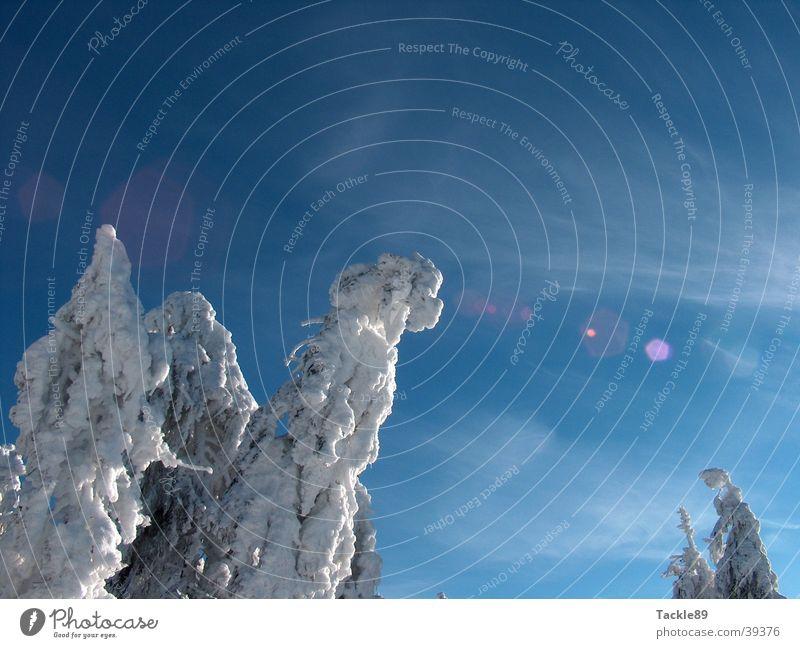 Schneelast 2 Baum Winter Berge u. Gebirge Tanne Schneelandschaft Harz
