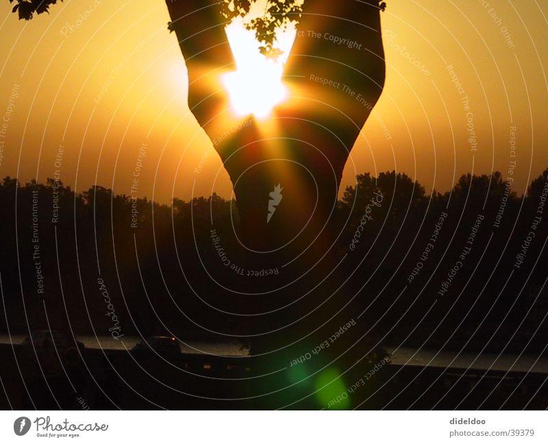 sonnenuntergang Baum Sonne außergewöhnlich Abenddämmerung