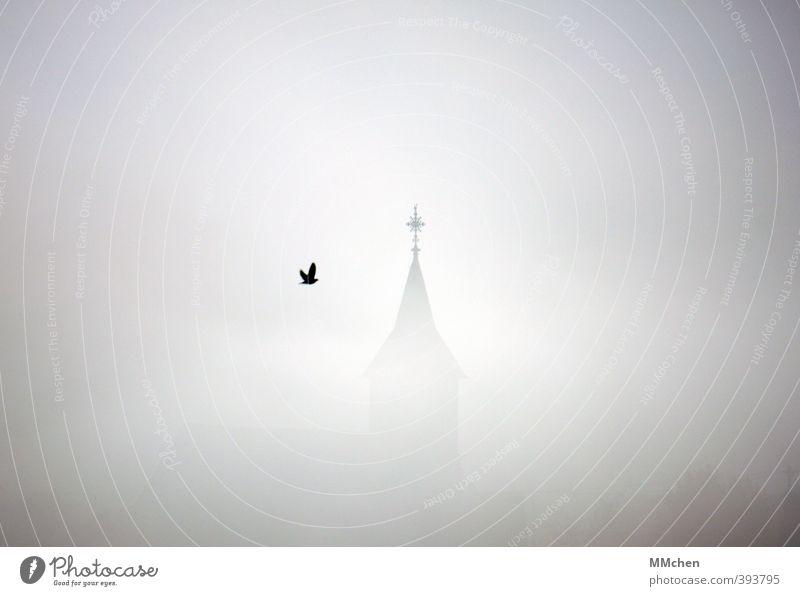 Beistand Klima Nebel Kirche Turm Gebäude Kirchturm Flügel Vogel Krähe Rabenvögel grau Stimmung Schutz Geborgenheit Opferbereitschaft Selbstlosigkeit
