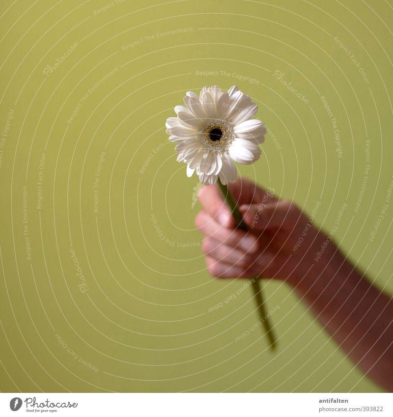 Danke maskulin Mann Erwachsene Partner Haut Arme Hand Finger 1 Mensch 30-45 Jahre Frühling Sommer Blume Blatt Blüte Astern Margerite Dekoration & Verzierung