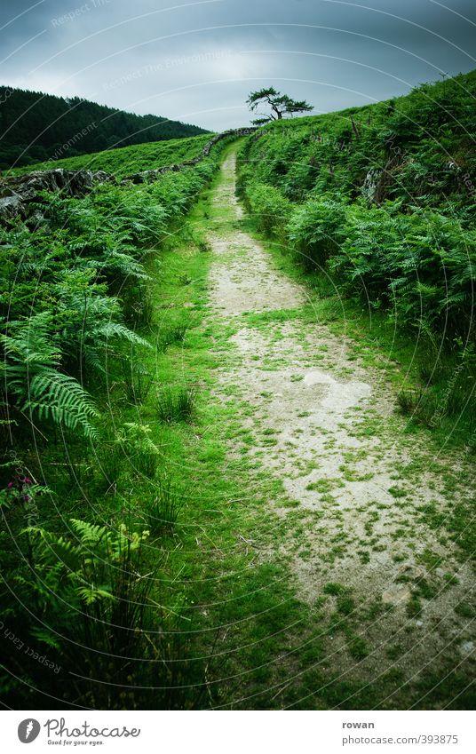 freie bahn Natur grün Baum Erholung Einsamkeit Landschaft Wolken dunkel Wiese Wege & Pfade Freiheit Garten Park Feld Erfolg wandern