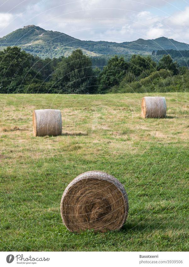 Runde Strohballen auf einer Wiese in einer hügeligen Landschaft. Provinz Álava, Baskenland, Spanien Heu Ballen Rundballen rund Feld Ernte Landwirtschaft Natur