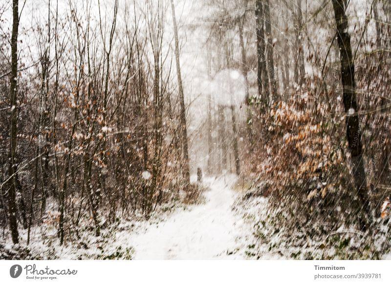 Schneefall beim winterlichem Waldspaziergang Schneeflocken Winter Weg Spaziergang Bäume Natur Laub kalt Wetter Außenaufnahme Umwelt Wintertag braun weiß