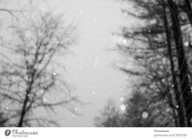 Winterliche Trübstimmung Bäume kahl schwarz weiß Schwarzweißfoto Menschenleer kalt Außenaufnahme Schneeflocken Schneefall Himmel grau