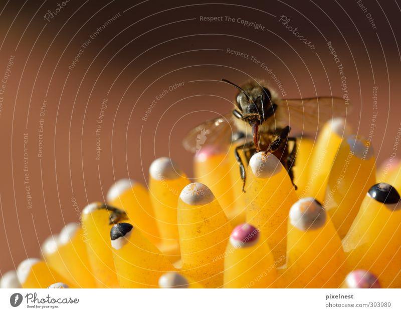 Bääh! Natur weiß Erholung Tier gelb klein braun orange niedlich beobachten Reinigen Flügel Sauberkeit Spielzeug nah Insekt