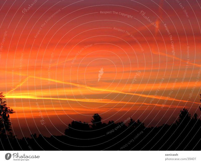 Sonnenuntergang mit schwarzen Bäumen Roter Himmel Orangewolken