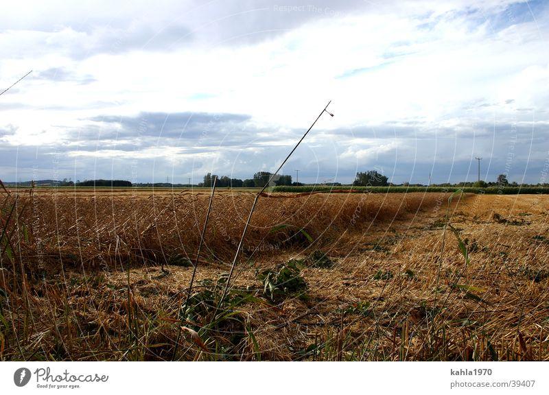 goldener Herbst blau Wolken Herbst gold Getreide Kornfeld herbstlich