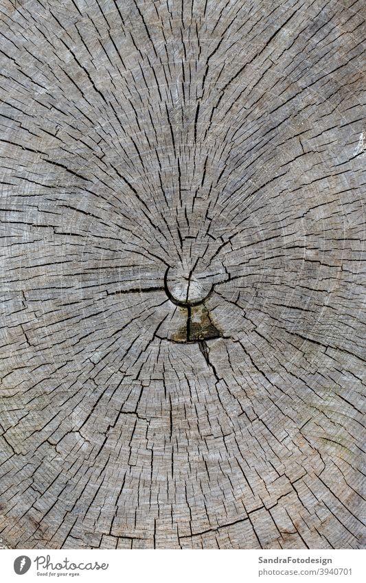 Nahaufnahme einer Holzscheibe mit Jahresringen Lebensalter gealtert Hintergrund Nahaufnahme Detail Natur in Nahaufnahme geknackt Dekoration & Verzierung Wald