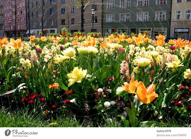 Frühlingslust Blume grün Stadt gelb Frühling