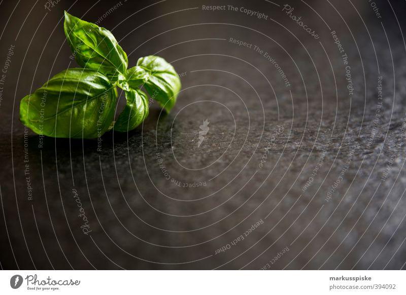 Basilikum - Ocimum basilicum Innenarchitektur Lebensmittel Wohnung Lifestyle Ernährung genießen Kräuter & Gewürze Gemüse Duft Bioprodukte Abendessen Picknick