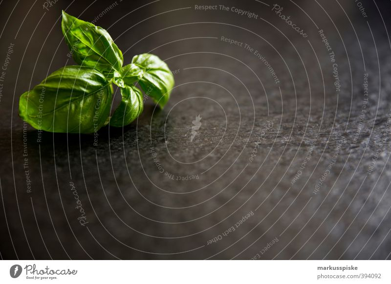 Basilikum - Ocimum basilicum Innenarchitektur Lebensmittel Wohnung Lifestyle Ernährung genießen Kräuter & Gewürze Gemüse Duft Bioprodukte Abendessen Picknick Diät Mittagessen Salat Vegetarische Ernährung