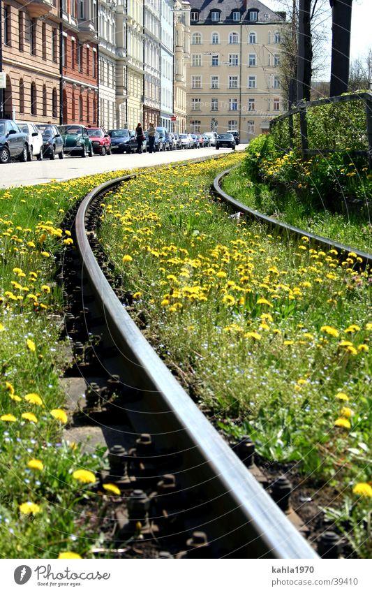 Schinen in die Stadt Blume grün Wiese Frühling Verkehr Gleise