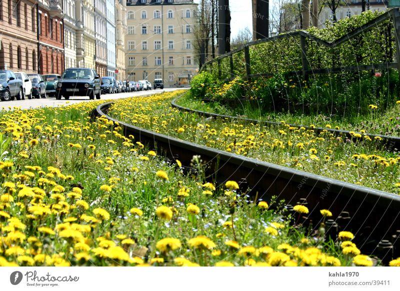 Schienen in die Stadt Blume grün Wiese Frühling Verkehr Gleise