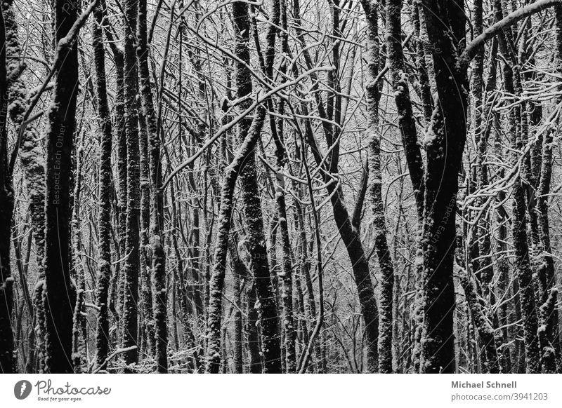 Bäume nach einem Schneefall Wald Natur Landschaft Außenaufnahme Menschenleer ruhig Winter Winterwald Winterwetter kalt Baum Winterstimmung Wintertag