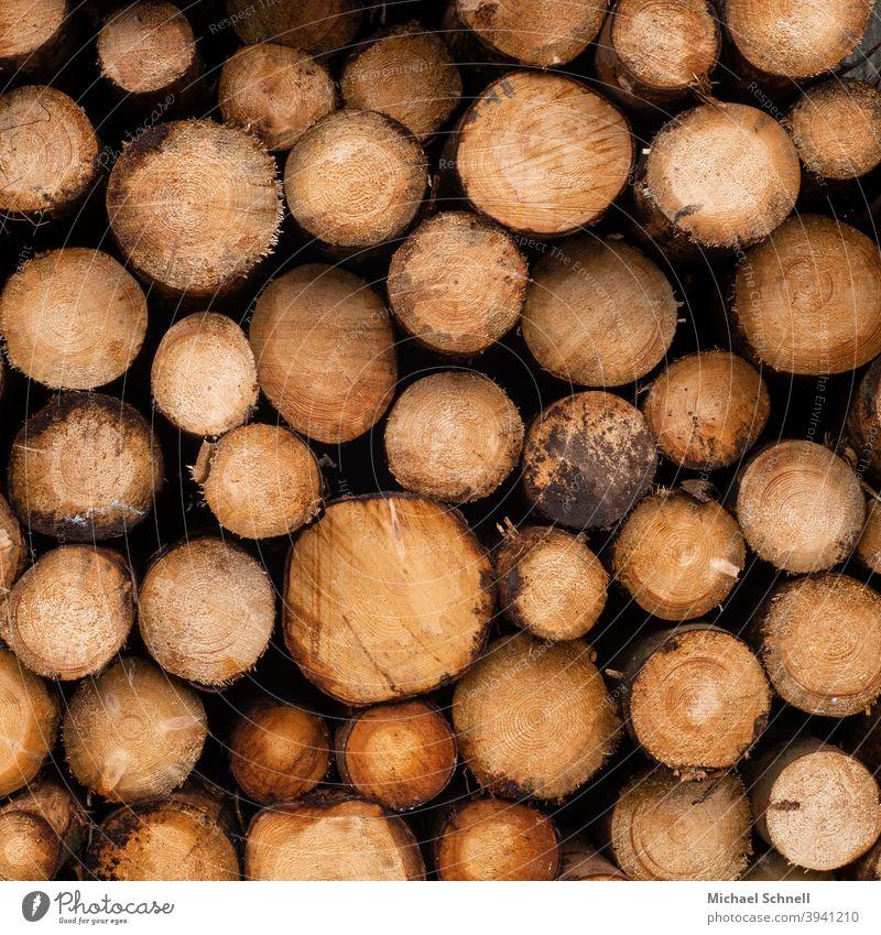 Gestapelte Stämme gefällter Bäume Baumstamm baumstämme Holz Menschenleer Forstwirtschaft Waldsterben gestapelte Bäume