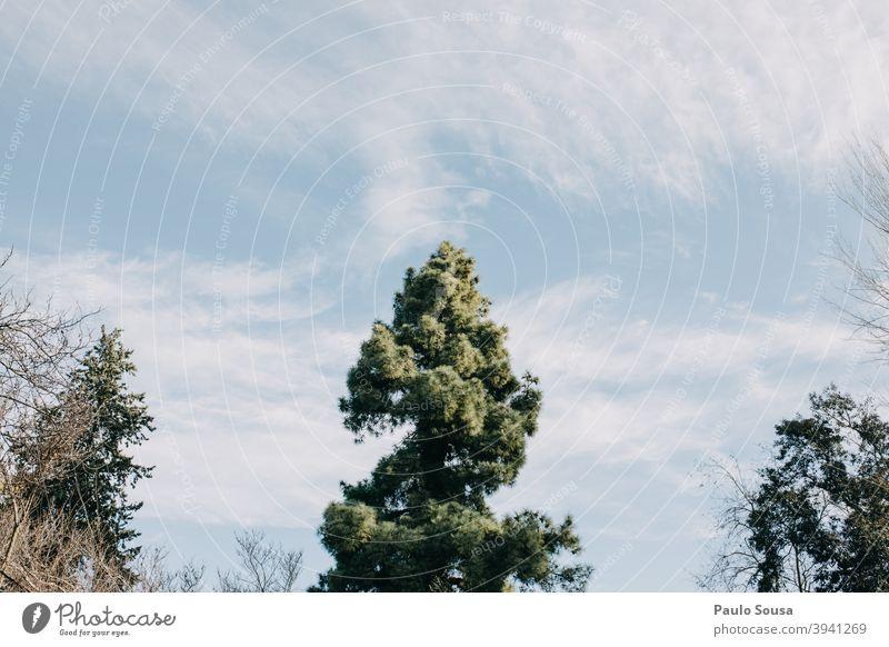 Baum gegen den Himmel Natur Ast Wolken Baumstamm Blatt blau grün himmelblau Wiese Sommer Baumrinde Wachstum Geäst Umwelt Außenaufnahme gelb Baumkrone Frühling