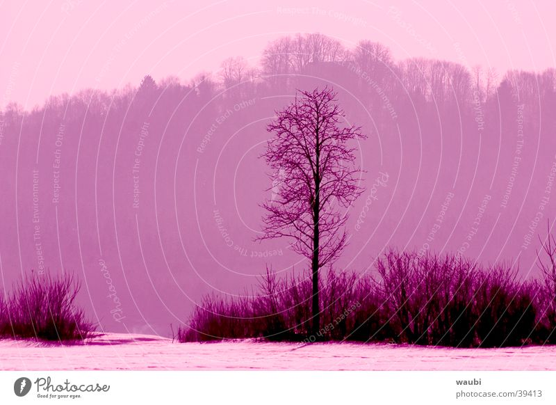 Lila Winter Baum ruhig Wald Traurigkeit