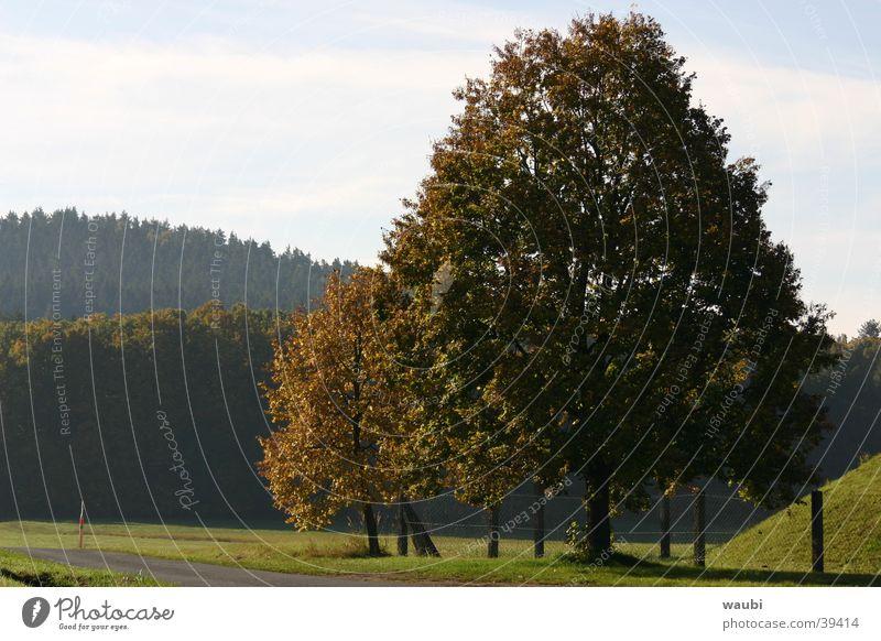 Natur Baum grün Herbst Luft