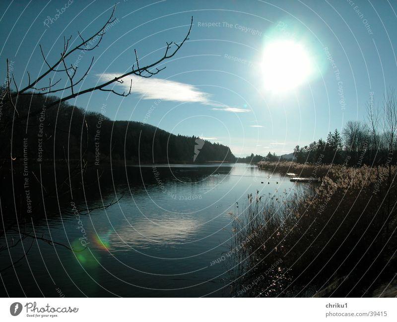 November-Isar Herbst Gegenlicht Schilfrohr Wolken Fluss Abwasserkanal Wasser Küste Blauer Himmel Ast
