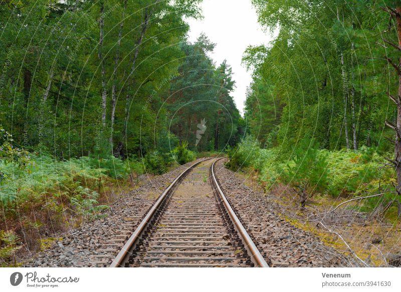 alte Eisenbahnstrecke in einem Wald in Deutschland Bahn Gleisbett Schienen bügeln Rust Eisenbahnschwellen Wälder Baum Bäume