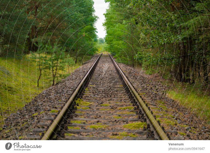 alte Bahnstrecke, am Ende der Strecken komplett mit Bäumen bewachsen, selektive Schärfe Gleisbett Schienen Eisenbahn bügeln Rust Eisenbahnschwellen Wald Wälder