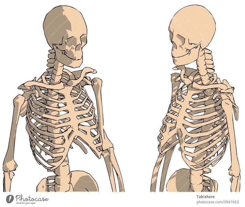 handgezeichnete menschliche Skelettzeichnung, menschliches Skelettsystem mit Rückenlinien anatomisch Anatomie Arme Kunst Rückgrat Hintergrund Biologie schwarz