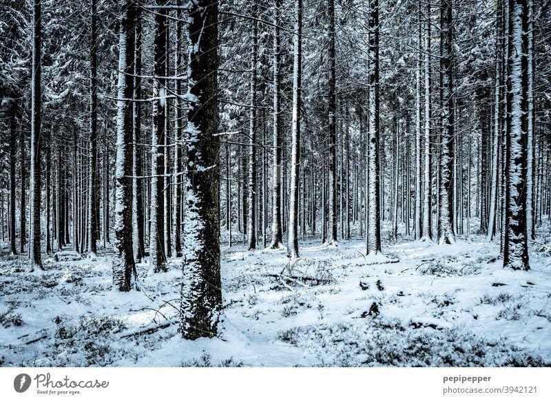 Wald im Winter mit Schnee auf den Baumstämmen kalt Eis Frost Natur Außenaufnahme Menschenleer Einsamkeit Waldlichtung Waldboden Waldspaziergang Waldstimmung