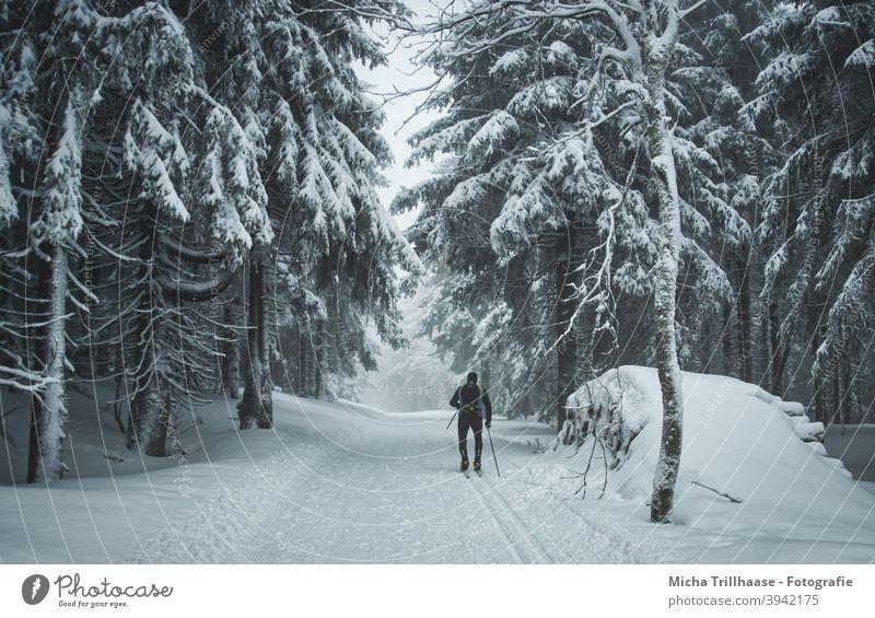 Skilaufen im verschneiten Wald Thüringen Thüringer Wald Rennsteig Schnee Winter Wintersport Skisport Langlauf Skilanglauf Loipe Frost schneebedeckt Urlaub