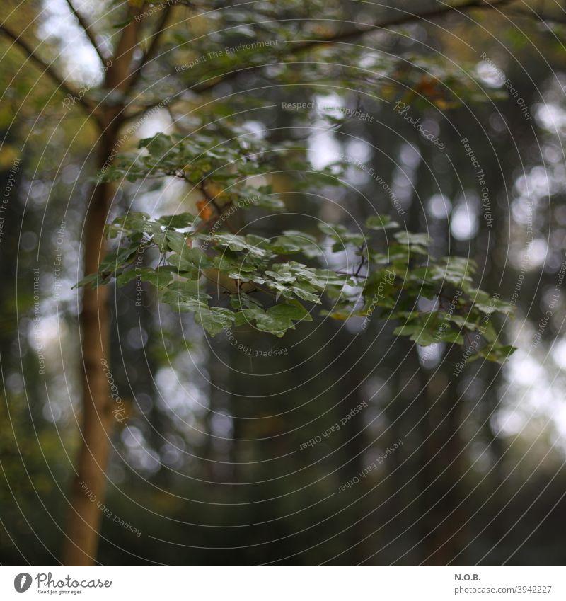 Nasses Laub am Baum Natur Ast Zweig grün Blatt Herbst Textfreiraum unten braun Schatten Außenaufnahme Pflanze Menschenleer Umwelt Schwache Tiefenschärfe Tag