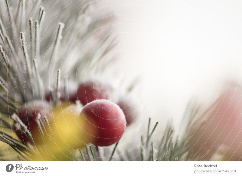 Rote Beeren am Nadelzweig Winter rot rote Beeren Nadelbaumzweig Frucht Nahaufnahme Natur kalt Eis Frost Farbfoto Detailaufnahme Textfreiraum Menschenleer weiß