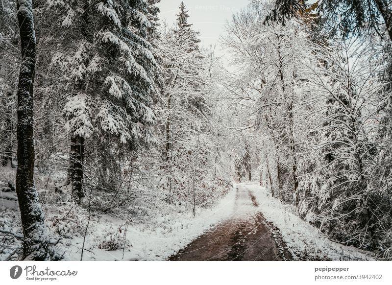 Waldweg im Winter mit Schnee auf den Bäumen Baum kalt Eis Frost Natur Außenaufnahme Menschenleer Einsamkeit Waldlichtung Waldboden Waldspaziergang Waldstimmung