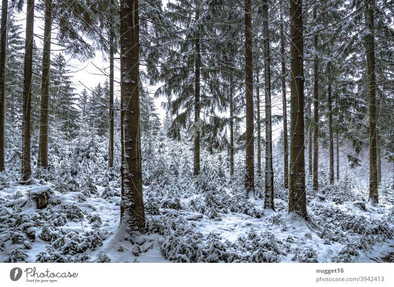 Winteridyll im Thüringer Wald Natur Außenaufnahme Baum Farbfoto Tag Menschenleer Landschaft Umwelt Pflanze natürlich Schnee Forst Forstweg kalt weiß Eis Frost
