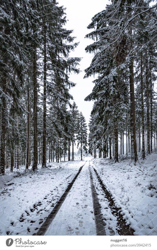 schneebedeckter Weg im Thüringer Wald Waldweg Natur Außenaufnahme Baum Farbfoto Tag Menschenleer Landschaft Umwelt Pflanze natürlich Winter Schnee Fahrspur