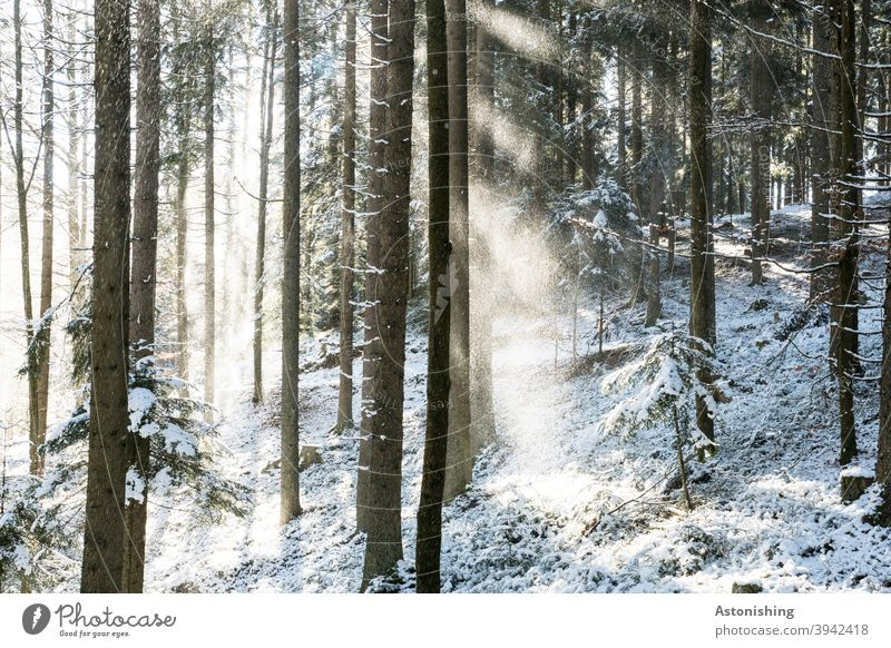 Licht im verschneiten Wald Schnee Winter Schatten Kontrast Bäume weiß Boden Schneeflocken Lichtstrahlen kalt Natur Außenaufnahme Menschenleer Baum Umwelt