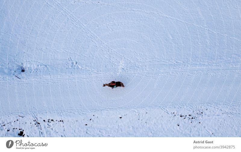 Luftaufnahme mit einer Drohne von einer einsamen Reiterin mit Pferd im Winter im Schnee luftaufnahme drohnenfoto pferd reiterin reiten reitsport winter schnee