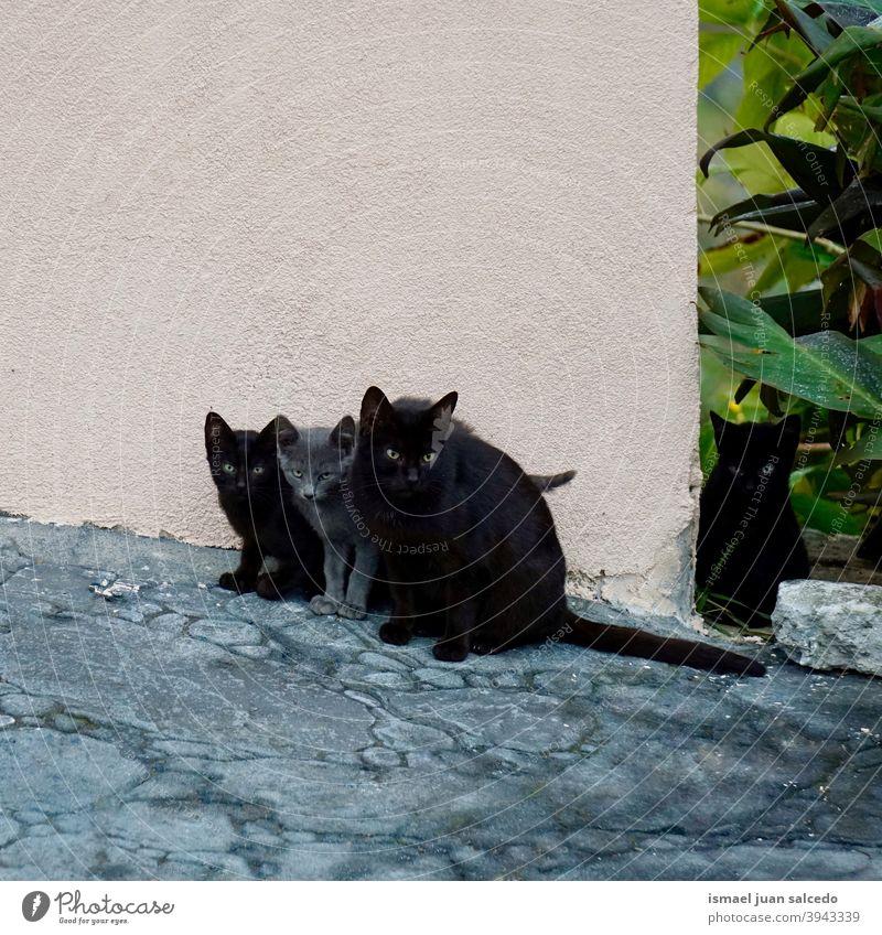 schöne schwarze und graue Katzen auf der Straße Haustier Kätzchen Katzenbaby katzenhaft streunende Katze Irrläufer heimisch Backenbart Porträt Tier Kopf Auge