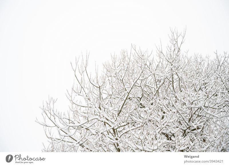 Zweige mit Schnee Zweige u. Äste weiß Wihter kalt Wetter Baum Baumkrone