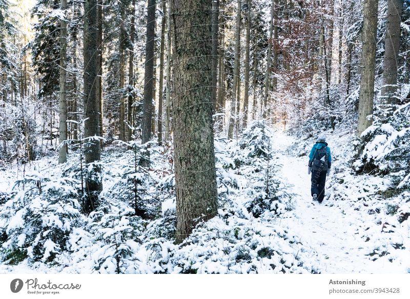 Spazieren im Winterwald Wald Spaziergang Wandern gehen Frau Natur Landschaft Schnee weiß Baumstamm Rinde Bäume Wetter Kalt hell dunkel Kontrast Weg Pfad kalt