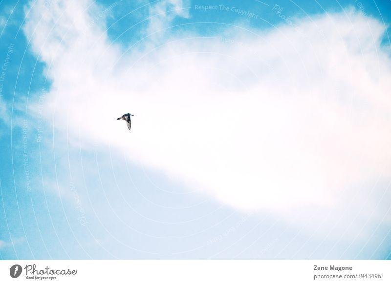 Ein einsamer Vogel fliegen auf blauen bewölkten Himmel Hintergrund Himmelshintergrund sehr wenige Minimalvogel Minimalhimmel Vogel am Himmel ein einsamer Vogel