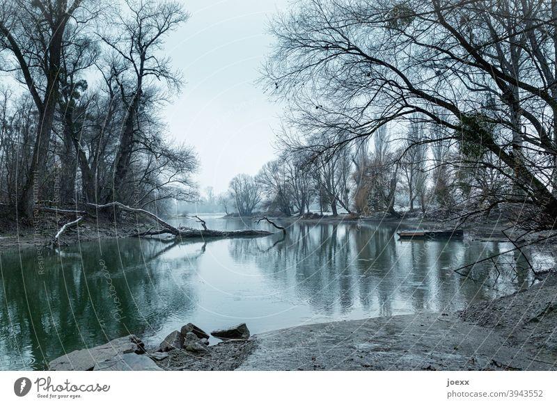 Rheinauenlandschaft in kalt-winterlicher Stimmung Natur Wasser Idylle Wetter Baum Baumstamm Winter Romantik Altrhein Totholz Gedeckte Farben Steg Anleger